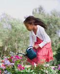 Adorable young black girl with a watering can watering beautiful purple and red flowers. The girl is wearing a pink dress and a white sweater. She has curly hair.
